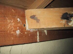 天井裏に蟻道