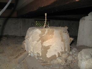 空中蟻道、土のトンネルを上に伸ばして行きます