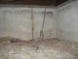 調査から6日たって駆除に入ると、 新しい蟻道が構築されていた