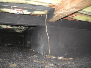 湿気とカビ臭さの対策で炭を敷きつめましたが、シロアリが発生しました。