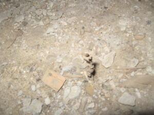 上から見た空中蟻道 ストロー状の穴が見えます。