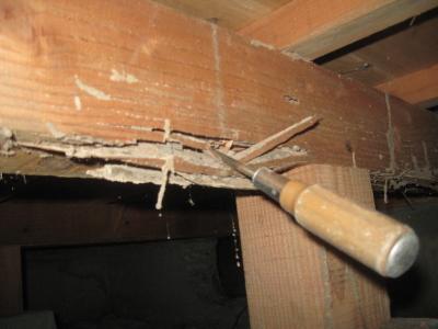 シロアリの被害にあった床下
